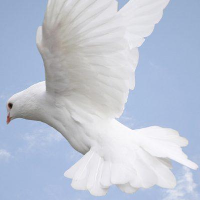 Saya Menerima Roh Kudus