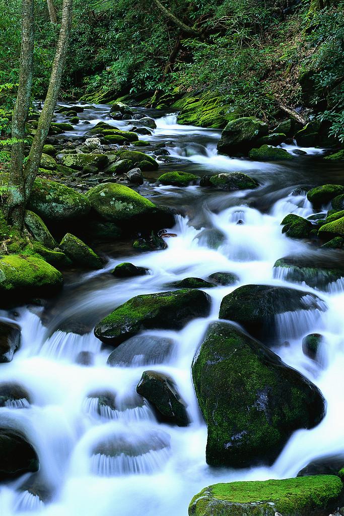 Aliran Sungai Dalam Taman Firdaus