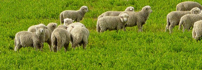 Gembala Dan DombaNya